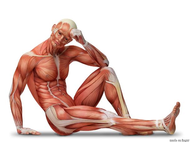 12 spannende Fakten über den menschlichen Körper.