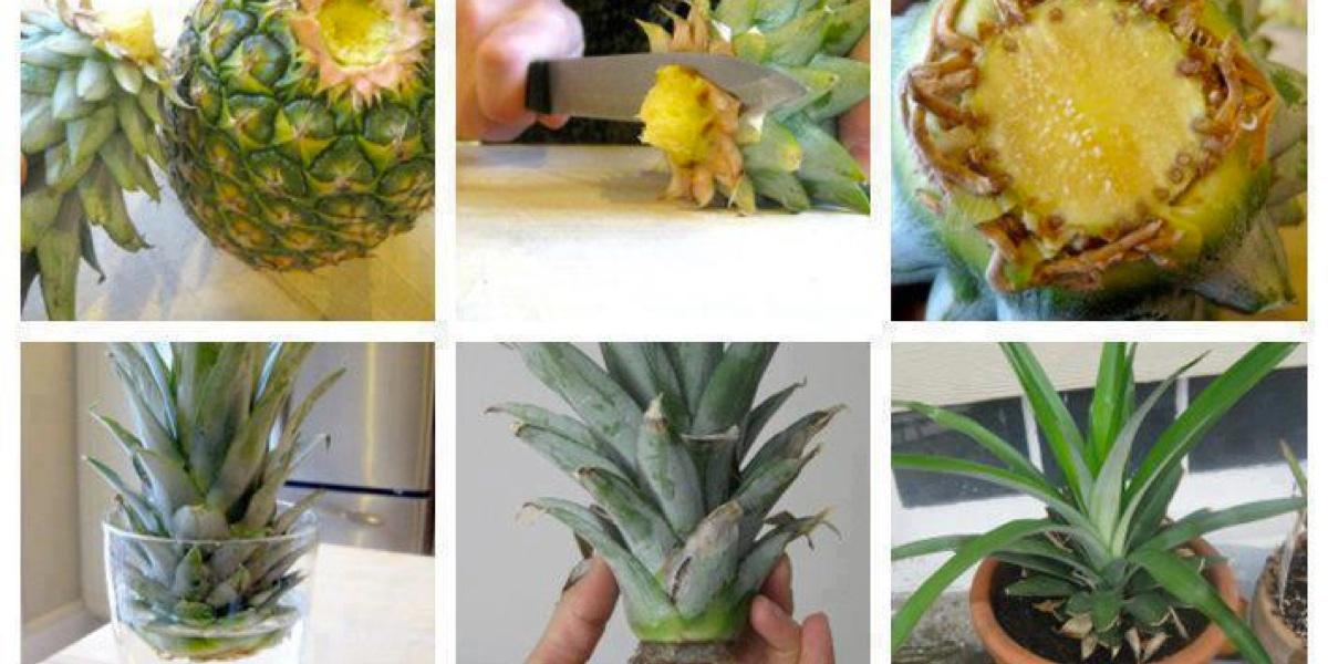 kartoffeln pflanzen anleitung