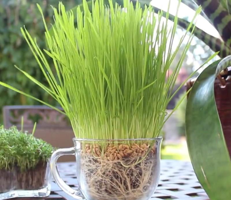 granulat aus windeln ist perfekt um deine pflanzen zu bew ssern. Black Bedroom Furniture Sets. Home Design Ideas