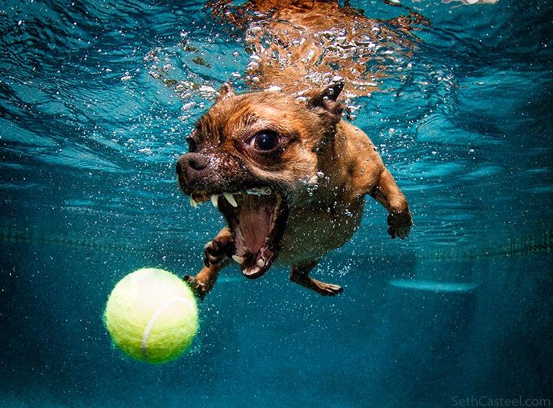 25 Fotos Von Hunden Unter Wasser