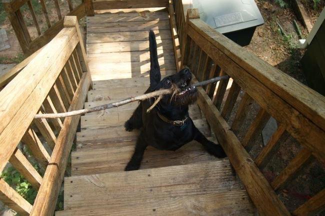 Tier-Pannen: Diese 32 Hunde stecken mächtig in der Klemme.