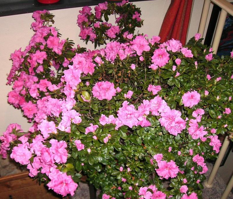 Was Diese Pflanzen In Geschlossenen Räumen Bewirken Ist überragend ... Pflanzen Fur Frische Luft Nutzen