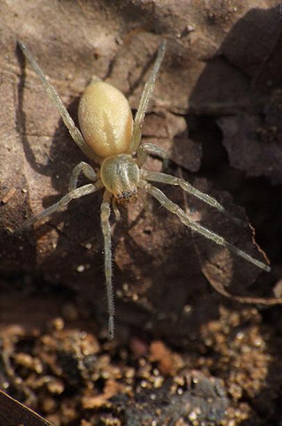 giftigkeit von spinnen
