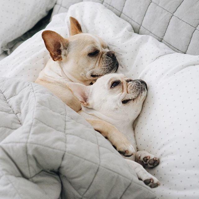 sieben gute gr nde deinen hund ins bett zu lassen. Black Bedroom Furniture Sets. Home Design Ideas