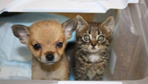 Niedlich Katzenbaby Und Welpe Werden Beste Freunde Im Tierheim