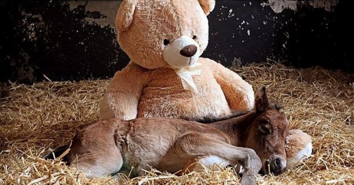 Die traurige aber wunderschöne Geschichte eines kleinen Ponys und seinem besten Freund