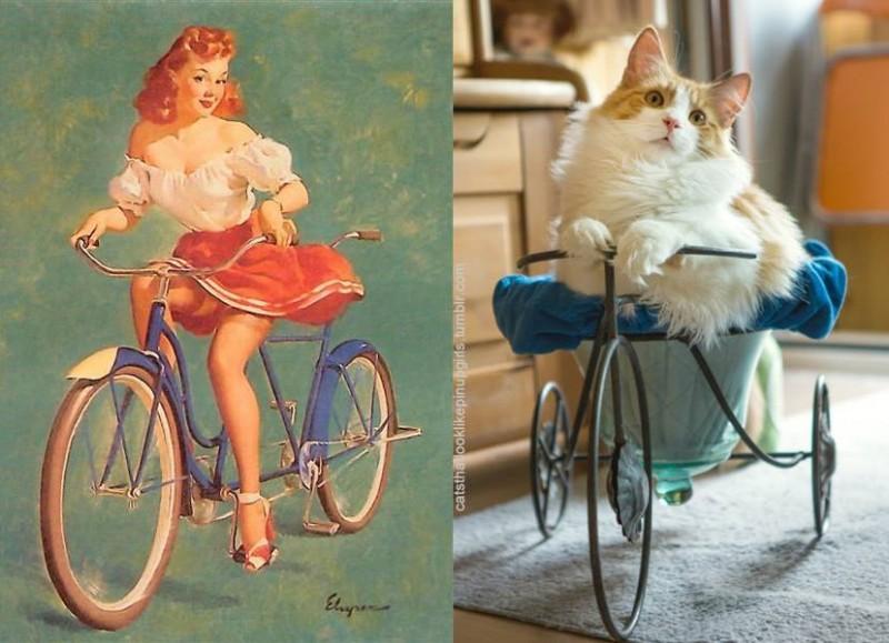 15 Katzen, die aussehen wie alte Pin-Up-Girls.