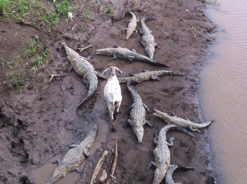 14 unverschämte Tiere, denen alles egal ist.