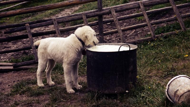 kokosöl gegen zecken bei hunden anwendung