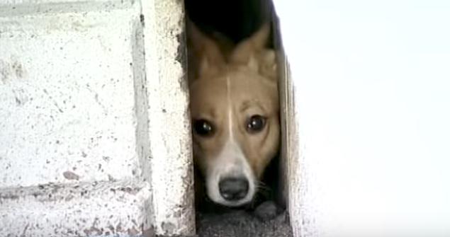 Die Anwohner wissen, wer in dem Haus gefangen ist, aber niemand hilft. Erst, als die Frau durch das Loch kriecht, wird das Leben gerettet.