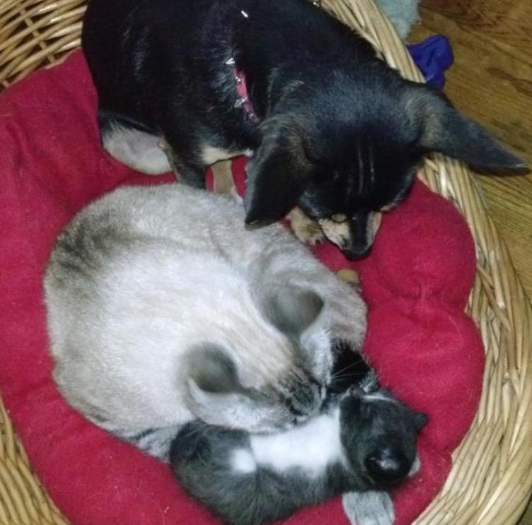 15 hunde die sich f r katzen halten auf die katz. Black Bedroom Furniture Sets. Home Design Ideas