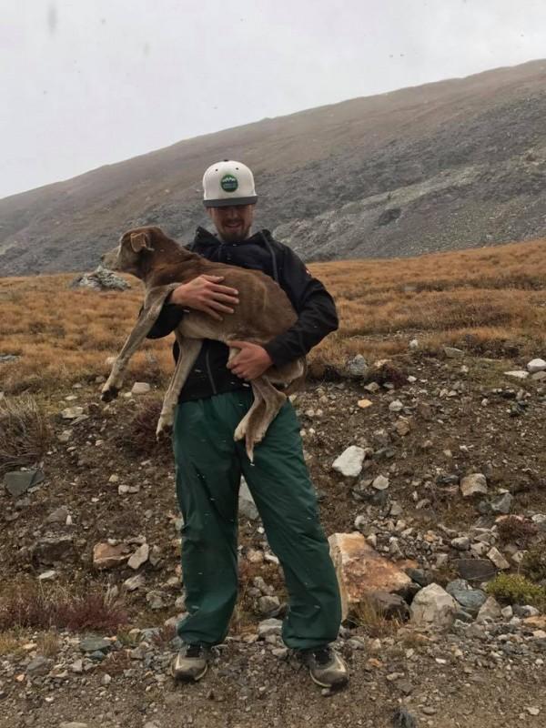 Paar geht auf gefährliche Tour, um alten Hund zu retten.