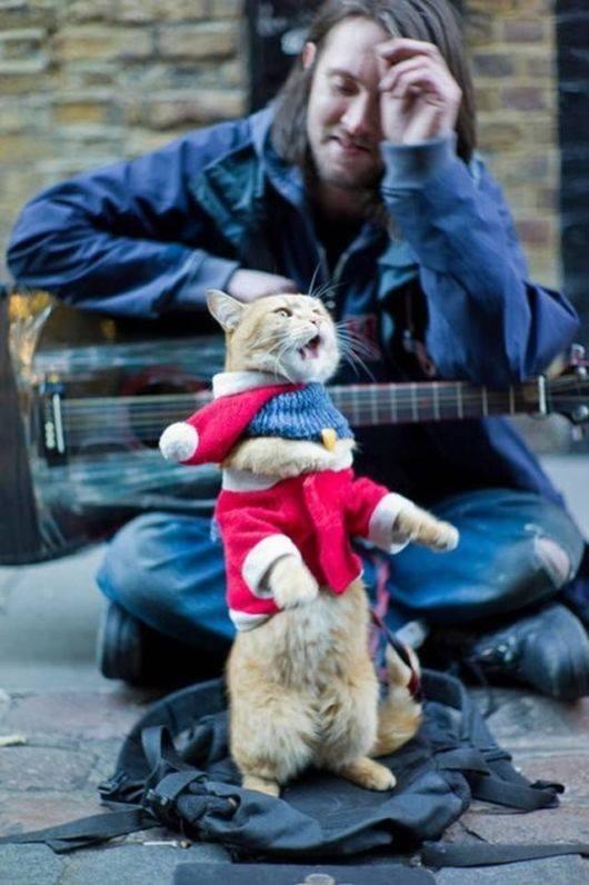 Straßenkater Gibt Obdachlosem Musiker Neuen Lebensmut