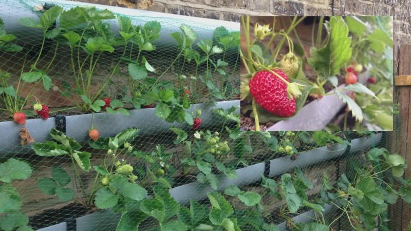 Fabelhaft 10 Life Hacks für den Garten. @ZW_88