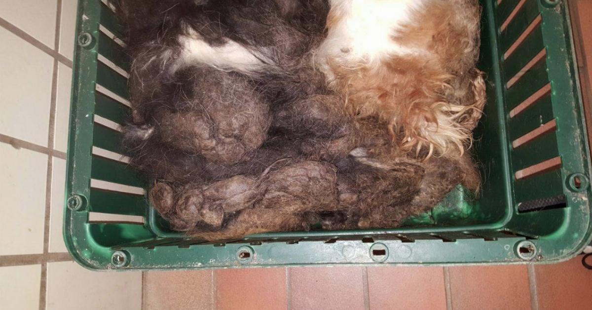 2 v llig verwahrloste hunde in nordrhein westfalen im m ll gefunden. Black Bedroom Furniture Sets. Home Design Ideas