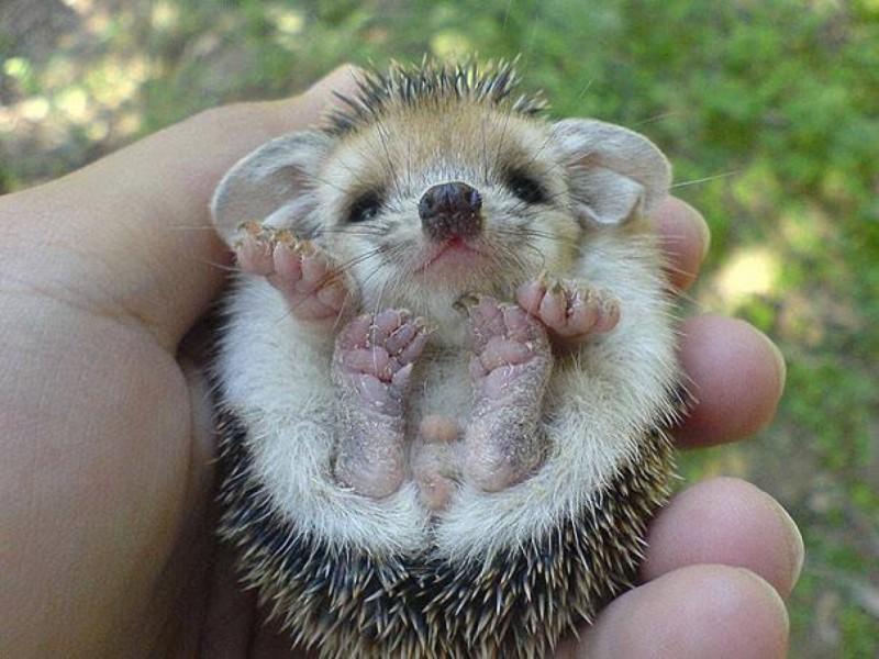 google bilder süße tiere