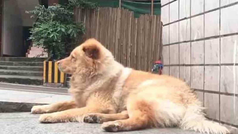 Treuer Hund Wartet Jeden Tag 12 Stunden An U Bahn Eingang