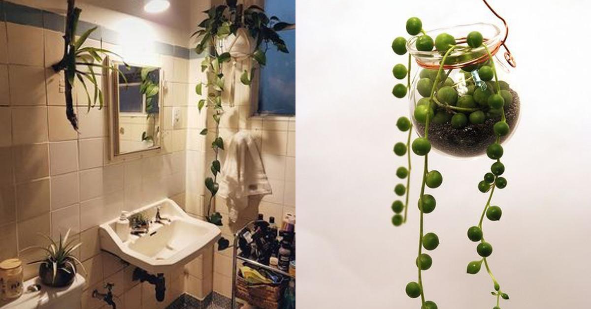 Ideal fürs Bad: 12 Pflanzen, die kaum Sonnenlicht brauchen.