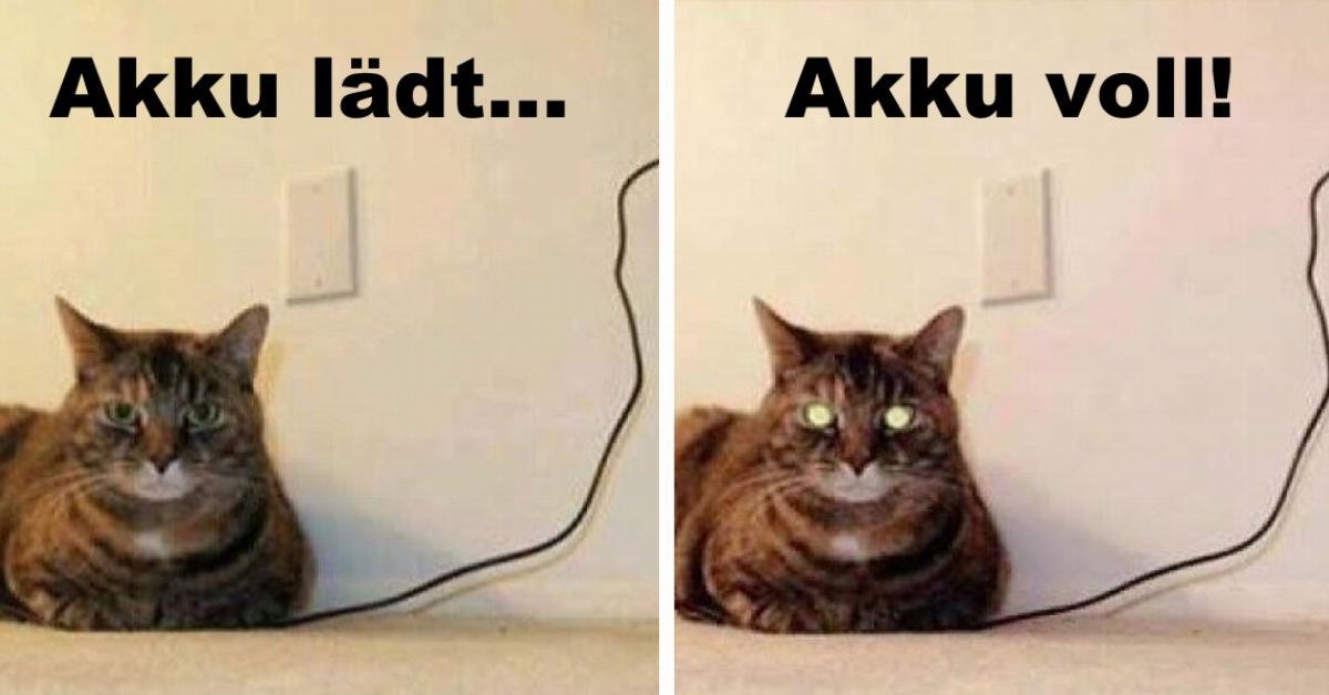 15 lustige katzen die ihren besitzern den tag versüßen