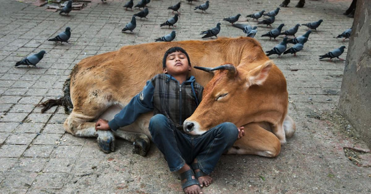 15 Bilder zeigen die komplexe Beziehung von Mensch und Tier